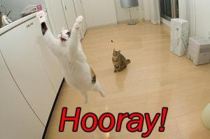 cat-saying-hooray